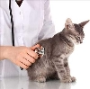 Ветеринарные клиники в Каджероме